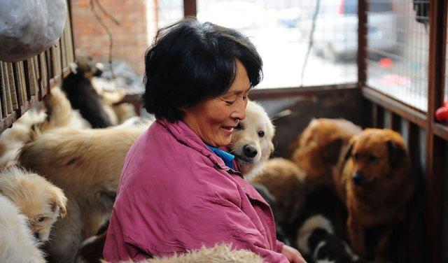 perros-rescatados-festival-yulin-china (14)
