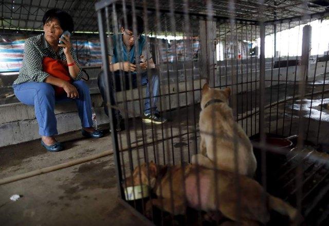 perros-rescatados-festival-yulin-china (18)