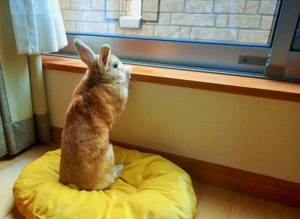 problemas-personas-bajas-conejo-koron-japon (4)