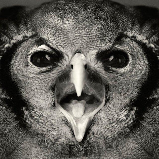 retratos-animales-emociones-humanas-vincent-lagrange (12)