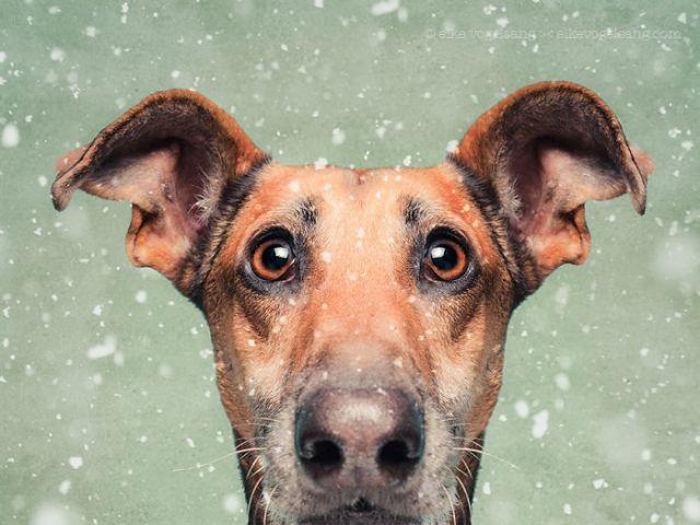 retratos-expresivos-perros-elke-vogelsang (16)