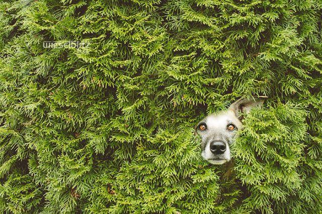 retratos-expresivos-perros-elke-vogelsang (17)