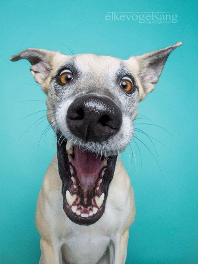 retratos-expresivos-perros-elke-vogelsang (6)