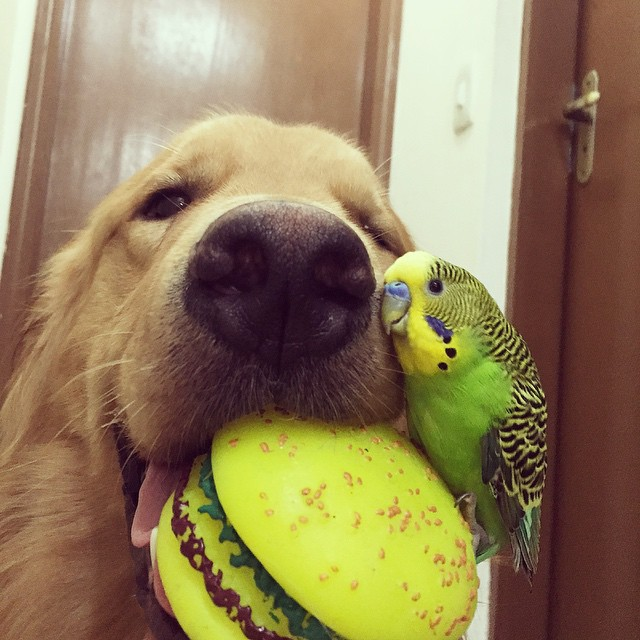amistad-animal-bob-perro-pajaros-hamster (1)