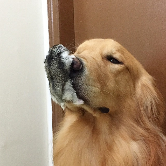 amistad-animal-bob-perro-pajaros-hamster (13)