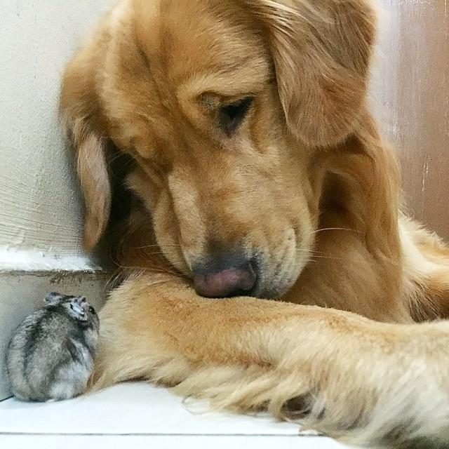 amistad-animal-bob-perro-pajaros-hamster (15)