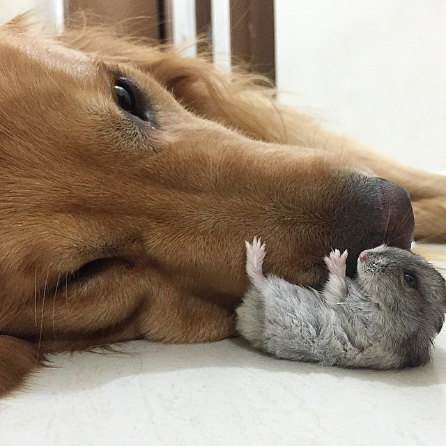 amistad-animal-bob-perro-pajaros-hamster (20)