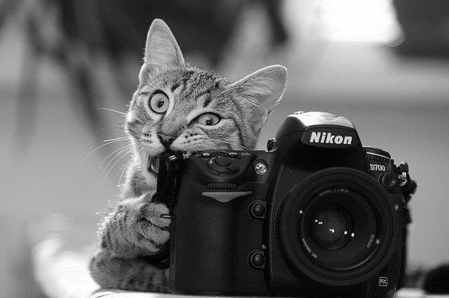 animales-camara-ayudando-fotografos (13)
