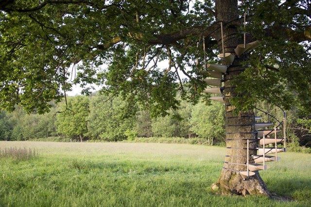 escaleras-caracol-arboles-thor-ter-kulve-robert-mcintyre (3)
