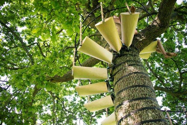 escaleras-caracol-arboles-thor-ter-kulve-robert-mcintyre (5)