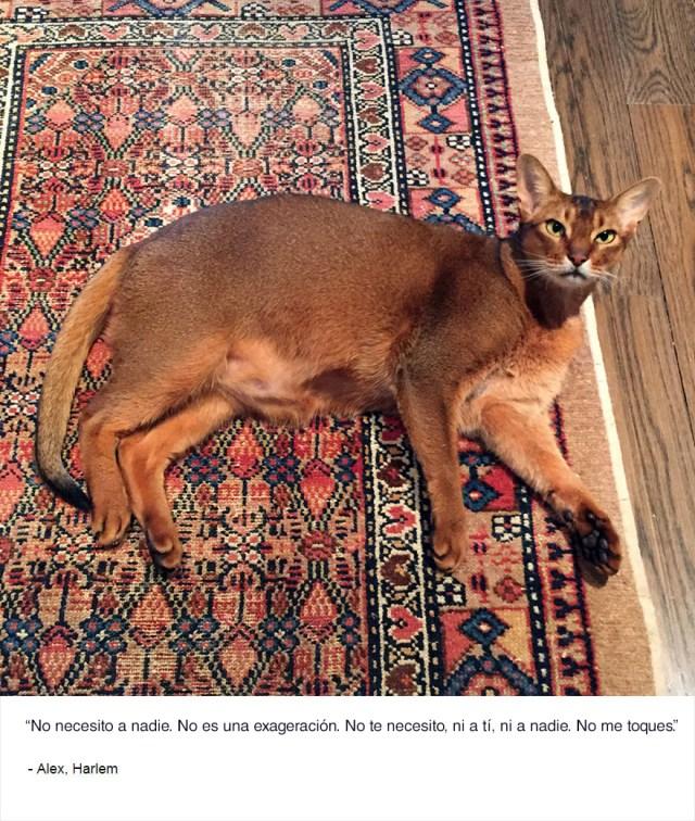 felinos-de-nueva-york-blog-jim-tews-12
