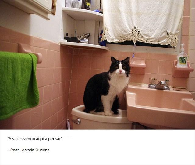 felinos-de-nueva-york-blog-jim-tews-14