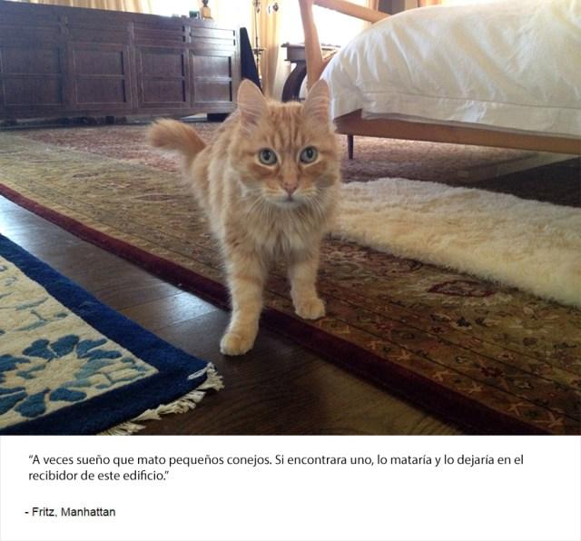 felinos-de-nueva-york-blog-jim-tews-15