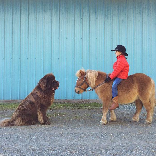 fotos-amistad-hijo-julian-perros-caballo-stasha-becker (12)
