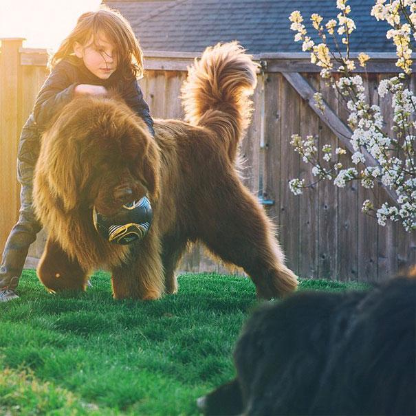 fotos-amistad-hijo-julian-perros-caballo-stasha-becker (9)