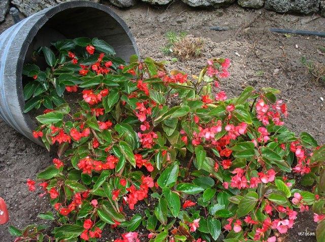 ideas-jardineria-flores-derramadas (8)