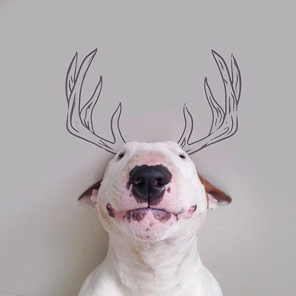 ilustraciones-interactivas-perro-jimmy-choo-rafael-mantesso (16)