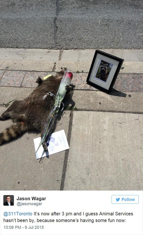 mapache-muerto-homenaje-luto-deadraccoonto (2)