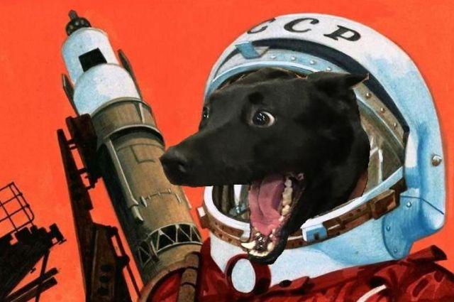 meme-internet-perro-emocionado-protegiendo-gato (4)