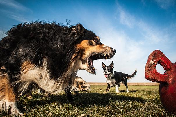 perros-gigantes-ilusion-optica (8)