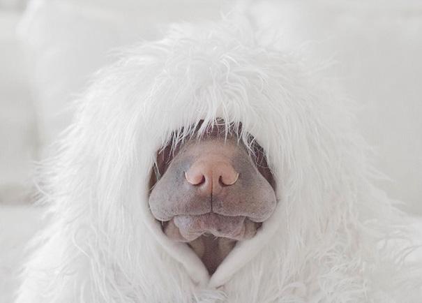 amistad-animal-sharpei-perro-gato-annie-jacobs (6)