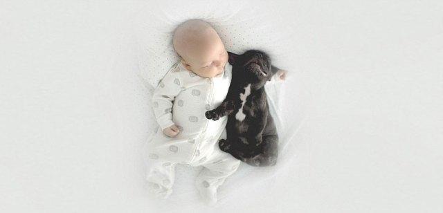 amistad-bebe-dilan-bulldog-farley-ivette-ivens (10)