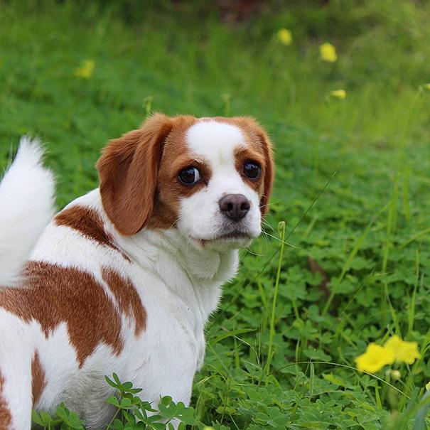 cruces-perros-raza (6)