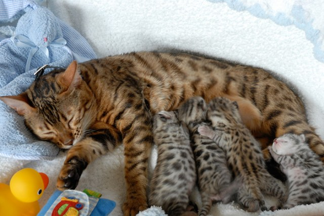 fotos-familia-gatos-gatitos (18)
