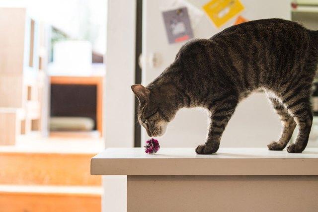 fotos-gatos-celebres-instagram-duenos-eeuu-meow-quarterly (19)