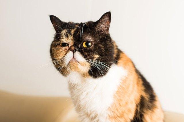 fotos-gatos-celebres-instagram-duenos-eeuu-meow-quarterly (25)