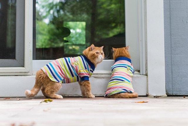fotos-gatos-celebres-instagram-duenos-eeuu-meow-quarterly (26)