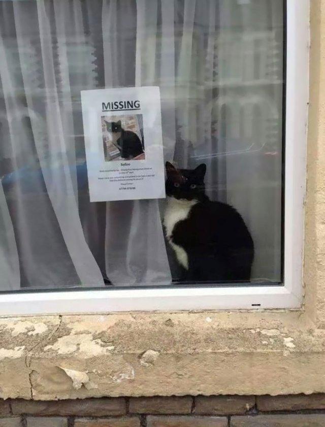 gato-encontrado-junto-cartel-perdido