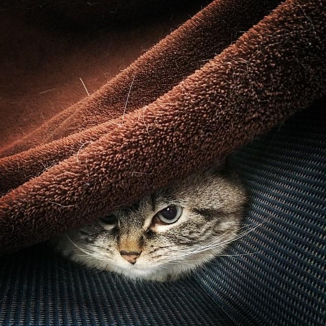 gato-vampiro-enfadado-loki (9)