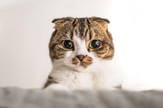 gatos-mostrando-emociones (10)