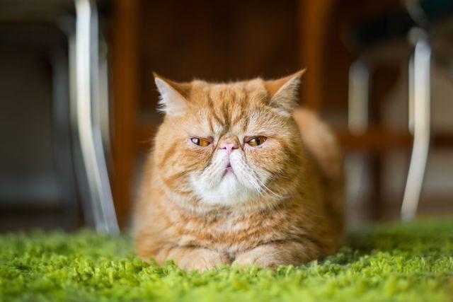 gatos-mostrando-emociones (2)