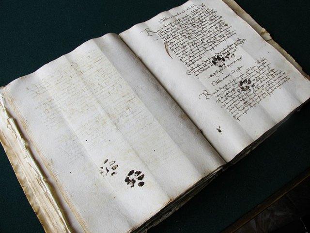 huella-gato-tejado-arcilla-romano-gloucester (2)