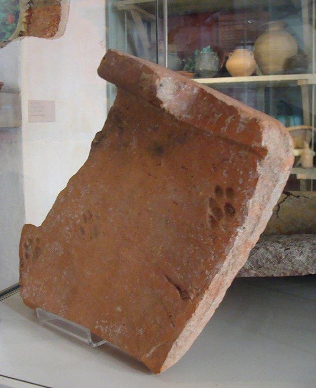 huella-gato-tejado-arcilla-romano-gloucester (3)