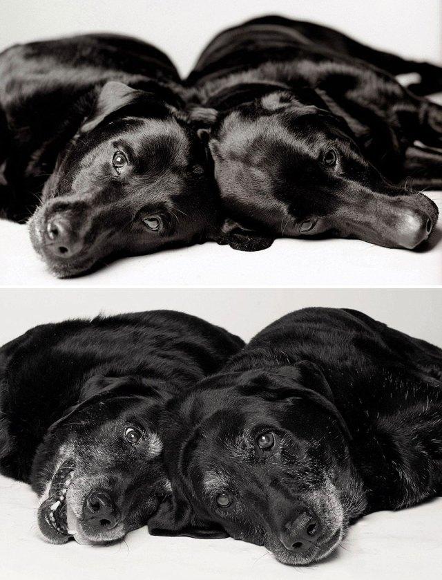 libro-retratos-perros-envejeciendo-amanda-jones (10)