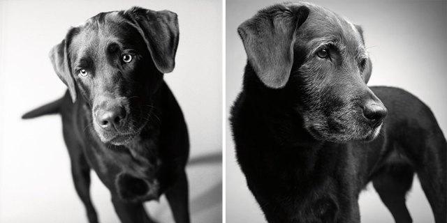 libro-retratos-perros-envejeciendo-amanda-jones (2)