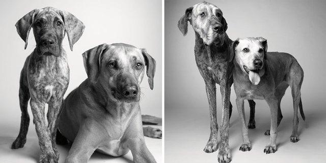 libro-retratos-perros-envejeciendo-amanda-jones (6)