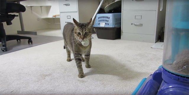 maquina-alimentadora-gatos-cazar-ben-millam (1)