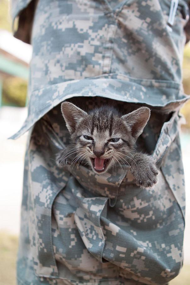 soldados-con-gatos (16)