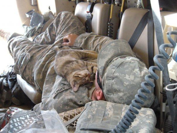 soldados-con-gatos (2)