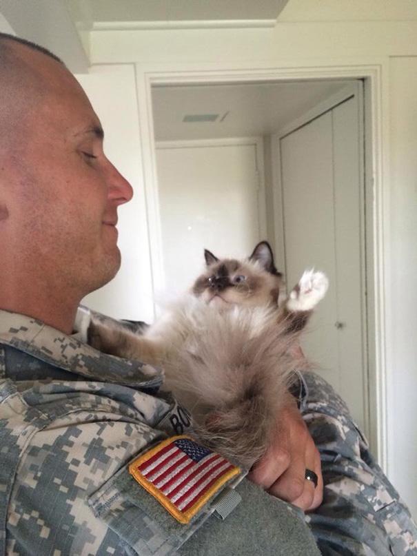 soldados-con-gatos (5)