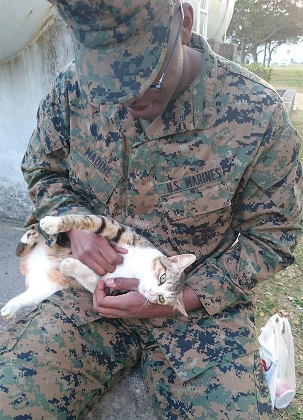 soldados-con-gatos (8)