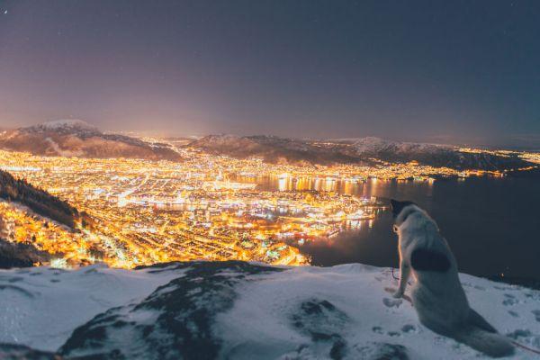 acampada-esqui-noruega-perro-husky-henrik-vikse (1)