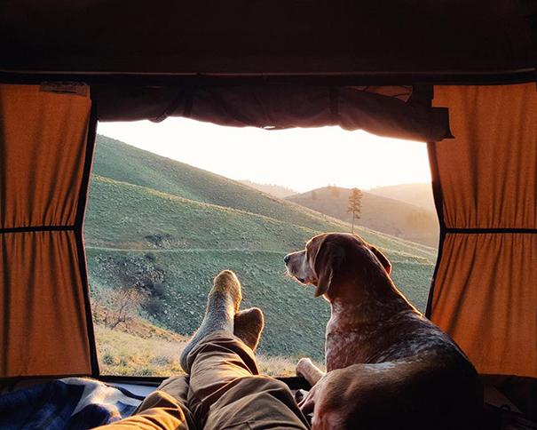 acampar-con-perros-ryan-carter (11)