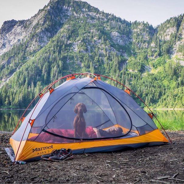 acampar-con-perros-ryan-carter (18)