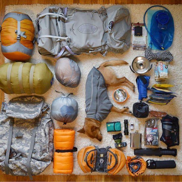 acampar-con-perros-ryan-carter (20)