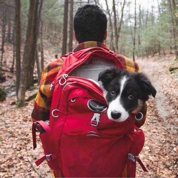 acampar-con-perros-ryan-carter (4)